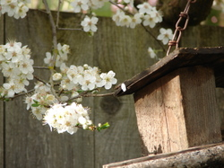 Blossoms2_2